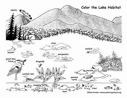 Lake Habitat Coloring Wildlife Environmental Adirondack Vs