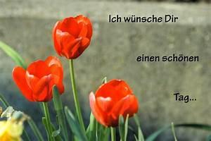 Schönen Freien Tag Bilder : tulpen ich w nsche dir einen sch nen tag foto bild pflanzen pilze flechten bl ten ~ Eleganceandgraceweddings.com Haus und Dekorationen