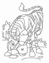 Coloring Pages Zebra Printable African Zebras Head Library Clipart Forget Horses Several Colors Similar Different Very These Popular sketch template