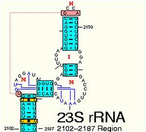 1C. Simple RNA Secondary and Tertiary Structure Base Pair ...