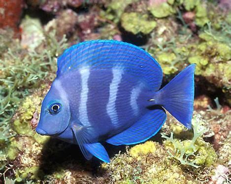 types  community fish posts tagged types  pet fish