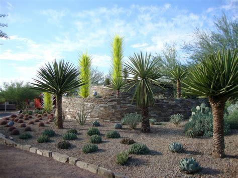 Desert Botanical Garden - danger garden the desert botanical garden part one