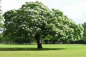 Arbre Ombre Croissance Rapide : arbres croissance rapide pour les jardiniers impatients ~ Premium-room.com Idées de Décoration