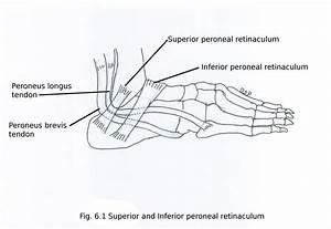 Lateral side of leg - myhumananatomy