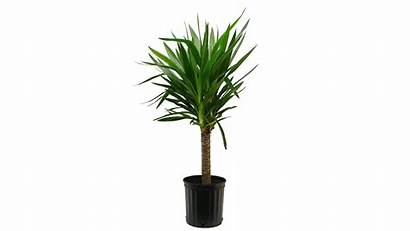 Plants Through
