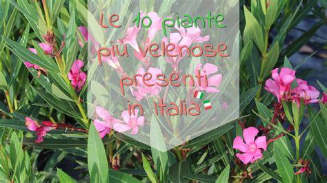 Piante Da Appartamento Velenose by Le 10 Piante Pi 249 Velenose Presenti In Italia Dezio