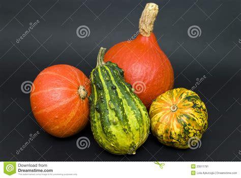 types of pumpkins various types of pumpkins stock image image of pumpkin 23511791