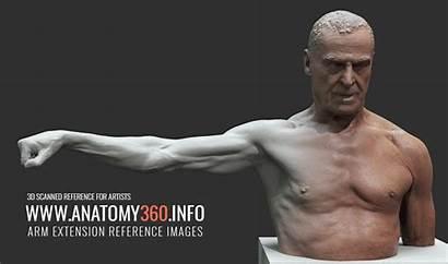 Arm Anatomy 360 Extension Reference Anatomy360 Info