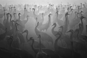 Black and White Photography by Guy Cohen-12 – Fubiz Media