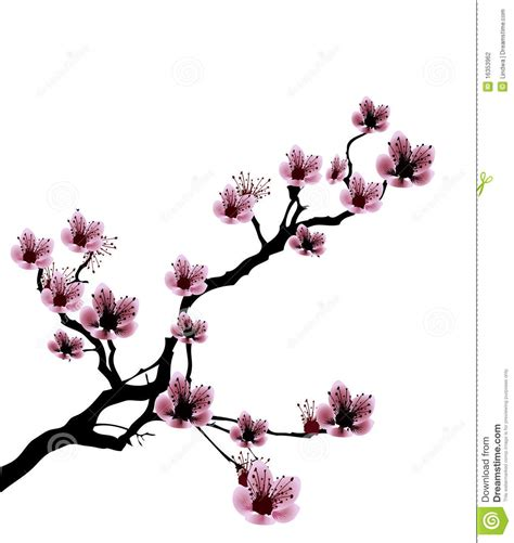 Cherry Blossom Clipart Drawn Pencil And In Color Cherry
