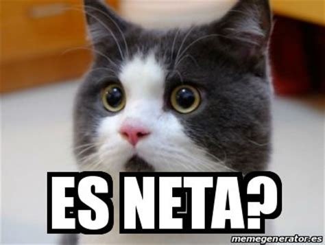 Memes De Gatos - meme risa gato jaja hilarious pinterest meme