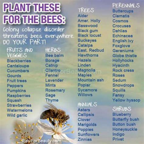 plants that attract bees home garden and outdoor