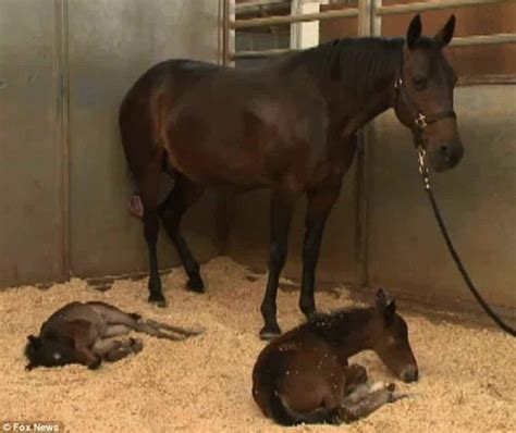 Pregnant Horse Defies All Odds By Giving Birth To Twin