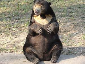 File:Bear sitting.JPG - Wikimedia Commons