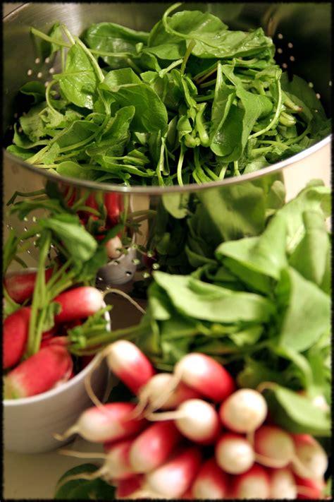 mobilier table cuisiner fanes de radis