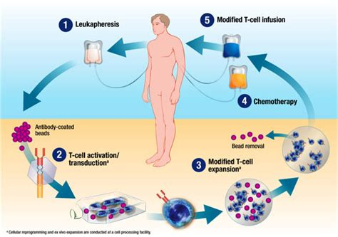 Chimeric Antigen Receptor (car) T-cell Immunotherapy For