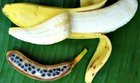 do bananas seeds banana anatomy