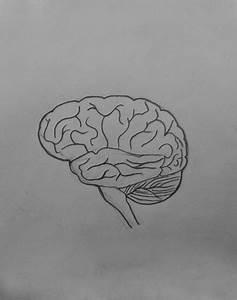 Draw It Neat   How To Draw Human Brain