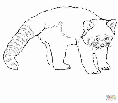 Panda Coloring Pages Realistic Printable Drawing Hawk