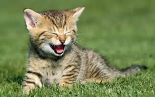 happy cat happy cat cats photo 36127325 fanpop