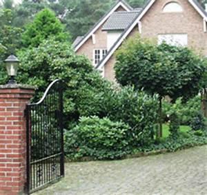 Sichtschutz Bäume Immergrün : immergr n rund ums jahr ~ Eleganceandgraceweddings.com Haus und Dekorationen