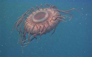 15 Bizarre Creatures Under the Sea | oneclickwonders