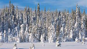 Seasonal Forest | Planet Earth | BBC America