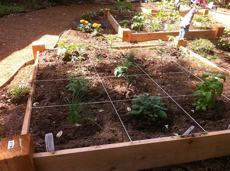10 steps to planting your square foot garden home and