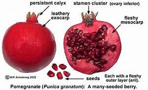 Fruit Terminology  Part 4