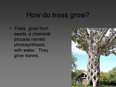 how does a tree take to grow planting trees how do trees grow