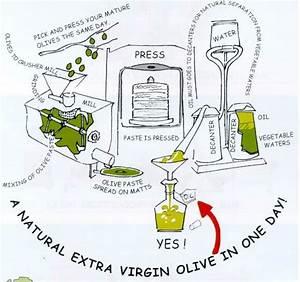 The Olive Oil Process       Just The Way We Make Our Own
