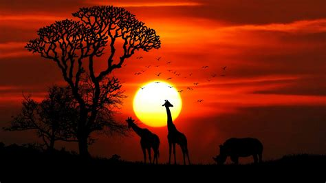 Animal Silhouette Wallpaper - wallpaper sunset giraffe rhinoceros silhouette hd