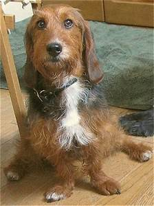36 Basset Hound Mixes That Will Melt Your Heart – Page 3 ...