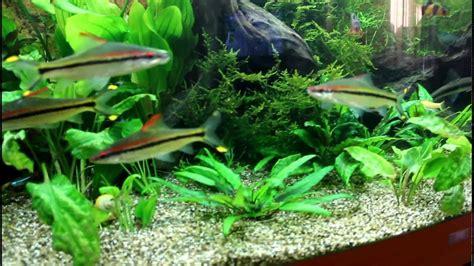 juwel vision 450 aquarium