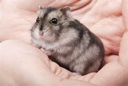 Hamster Bored Hamsters
