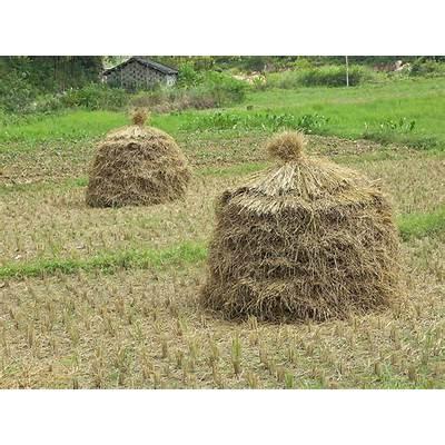 hay field bale -