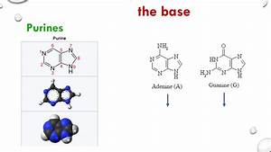 Nucleosides  Nucleotides And Nucleic Acids