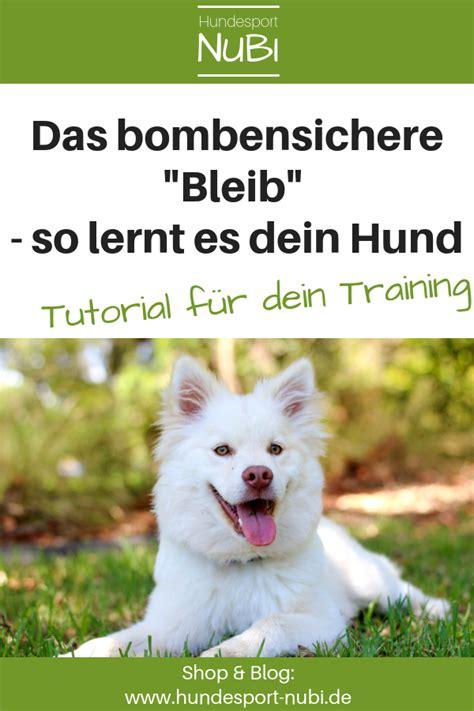 Glueckliche Haustiere Sauberkeit Und Erziehung by Hund Quot Bleib Quot Beibringen Wieso Ein Aufl 246 Sekommando Besser