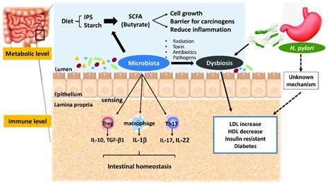 microorganisms  full text metabolic interaction