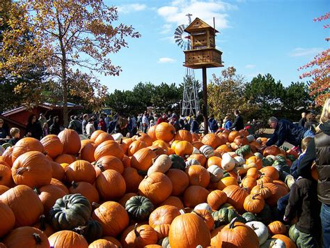 Central Illinois Pumpkin Patches by Local Illinois Pick Your Own Pumpkin Patches