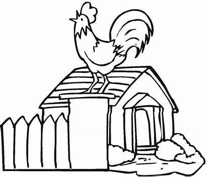 Colorear Coloring Rooster Gallo Morning Freecoloringpagefun Mythical