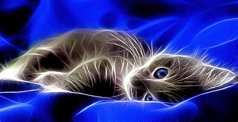Abstract Creative Wallpaper by Cats Blue Creative Animal Wallpaper Wallpaper