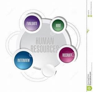 Human Resources Illustration Diagram Design Stock