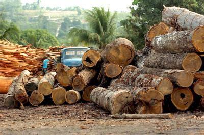 foknl nieuws vernietiging braziliaans regenwoud versnelt