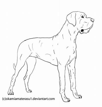 Dane Coloring Drawing Line Dog Dogs Drawings