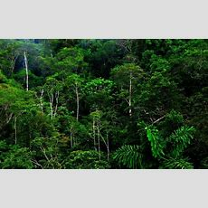 Amazon Rainforest Wallpaper ·① Wallpapertag