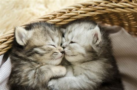 Cute Kittens Hugging Pictures