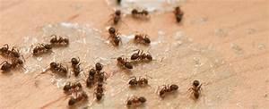 Ameisen Bekämpfen Im Garten : ameisen bek mpfen wie ein echter profi ~ Frokenaadalensverden.com Haus und Dekorationen