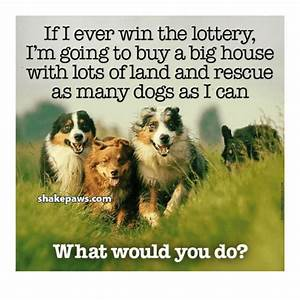 if i ever win the lottery i39m going to buy a big house With where can i buy a dog house