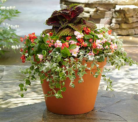 three beautiful container garden options